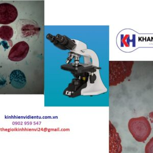 kính hiển vi sinh học labomed LB-204